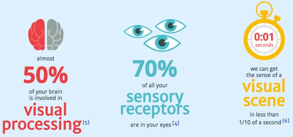 visual processing sensory receptors visual scene